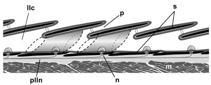 Figure8_CG-16-458